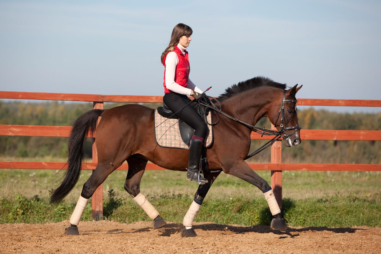 A Sample Horse Boarding Business Plan Template