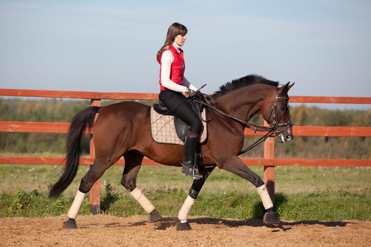horse ranch business plan